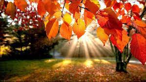 claves-operar-otoño